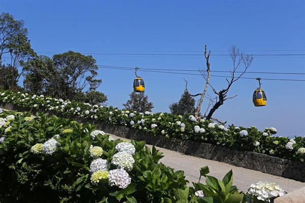 Những chiếc cabin cáp treo xinh đẹp nối nhau trôi giữa mây trời khiến tôi liên tưởng tới chuỗi hoa vàng rực rỡ nổi bật trên nền trắng mộng mơ. Ngồi giữa đài hoa ấy, du khách có thể nhìn ngắm muôn sắc xanh, sắc tím của cẩm tú cầu, arapang trải dài mướt mải mở lối vào Làng Pháp