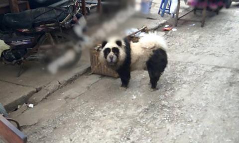 cong-dong-thich-thu-voi-hinh-anh-gau-panda-xuat-hien-o-vung-tau