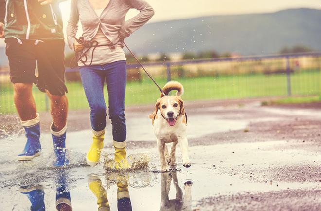 Chuyển động phần hông khi đi bộ sẽ giúp làm săn chắc cơ bụng, eo và bắp đùi.