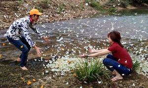 Vườn quốc gia Cúc Phương vào mùa bướm trắng