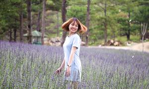 Vườn oải hương như trời Âu ở Đà Lạt