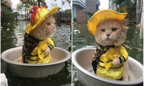 'Hoàng thượng Mèo' ngồi chậu vi hành gây cười