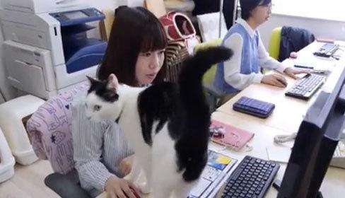 Công ty Nhật Bản thưởng tiền cho nhân viên nuôi mèo