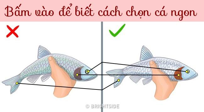 8-loai-ca-hai-san-an-cang-it-cang-tot-8