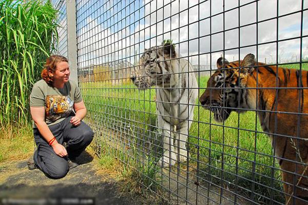 Rosa đã bị chính một trong những con hổ mà cô chăm sóc hàng ngày ở sở thú tấn công.
