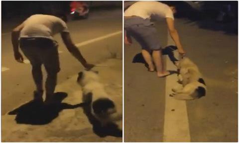 Mặc chủ kéo, chó nhất quyết 'ăn vạ' giữa đường