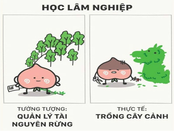 loat-anh-su-that-ve-nghe-nghiep-tuong-lai-khien-cong-dong-phi-cuoi-1