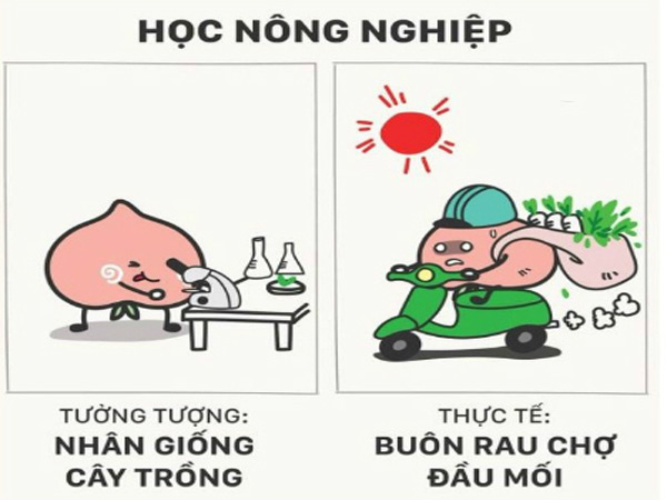 loat-anh-su-that-ve-nghe-nghiep-tuong-lai-khien-cong-dong-phi-cuoi
