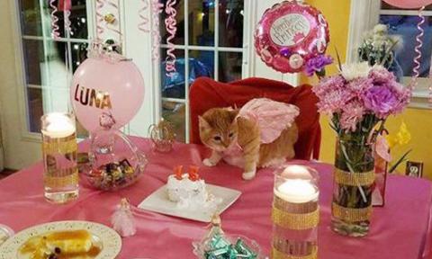 Mèo được tổ chức tiệc sinh nhật 15 tuổi