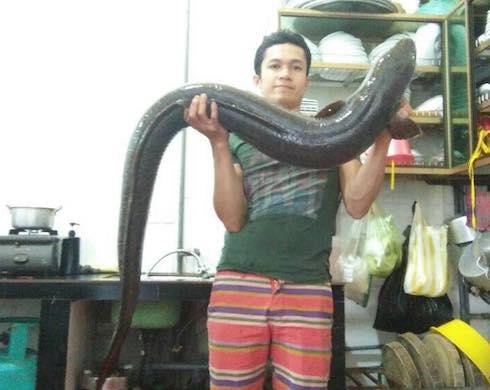 nguoi-dan-nghe-an-bat-duoc-ca-lech-15kg