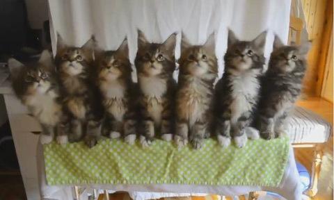 Đàn mèo lắc lư theo điệu nhạc