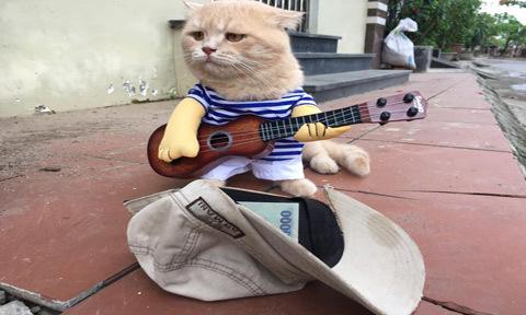 'Nghệ sĩ đường phố' Mèo hút like Facebook