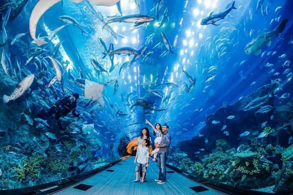 Thủy cung S.E.A. Aquarium  Nằm trên đảo Sentosa, thủy cung S.E.A. Aquarium cũng mang đến cho bạn nhiều trải nghiệm thú vị không kém. Đây là nơi tập hợp hơn 100.000 loài sinh vật biển thuộc 800 loài được tập hợp trong khu đại dương nhân tạo lớn nhất Đông Nam Á. Ở khu vực tham quan, bạn sẽ thực sự choáng ngợp trước bể cá khổng lồ với tấm kính lớn nhất thế giới, rộng 36 mét và cao 8,3 mét.