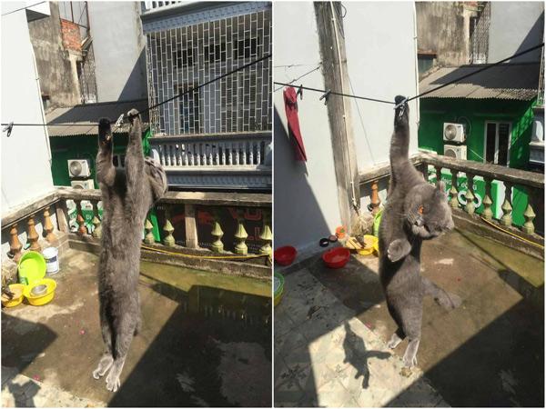 anh-meo-du-day-phoi-nang-hut-nghin-like-facebook-1