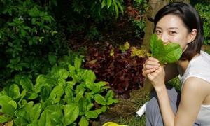 Vườn rau sạch trong ngôi biệt thự của vợ chồng Bae Yong Joon