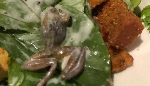 Thực khách nôn ọe khi thấy ếch chết trong đĩa salad