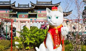 Thành phố mèo ở Malaysia ám ảnh cả người dân lẫn du khách