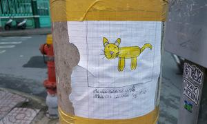 Hai anh em vẽ tranh tìm mèo lạc