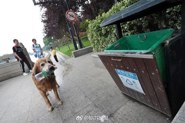 Theo Shanghaiist, một chú chó đã góp phần giữ sạch sẽ cho dòng sông Tô Châu ở Trung Quốc.
