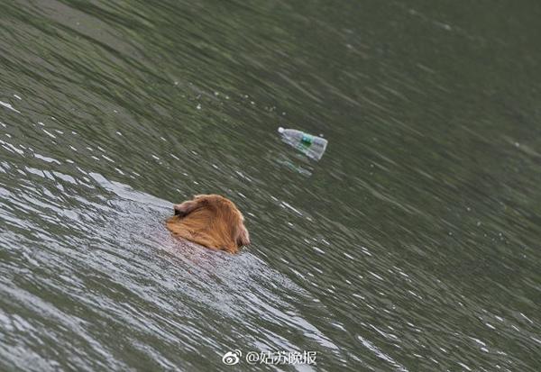 Chủ sở hữu của con chó cho biết mỗi lần họ đi dạo, con chó đều thu thập được khoảng 20 chai lọ rỗng.