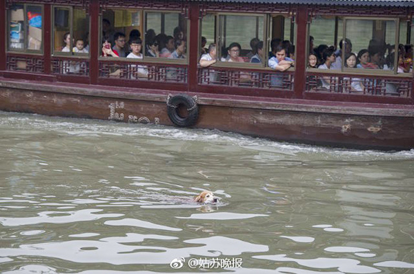 Trong suốt thời gian qua, người chủ ước tính rằng con chó lông vàng của mình đã nhặt được khoảng 2.000 chiếc chai.