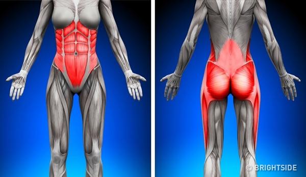 Làm săn chắc cơ bắp Plank là bài tập lý tưởng cho vùng cơ bụng bởi vì plank tham gia vào tất cả các nhóm cơ chính yếu bao gồm