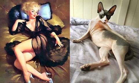 Khi mèo hóa thân thành người mẫu ảnh