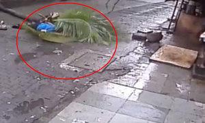 Nữ MC nổi tiếng Ấn Độ tử vong do cây dừa đổ vào người