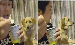 Chú chó thèm kem nhưng 'tự ái cao'