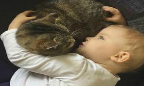 Mèo kiên nhẫn nằm nghe cậu chủ nhỏ trút bầu tâm sự
