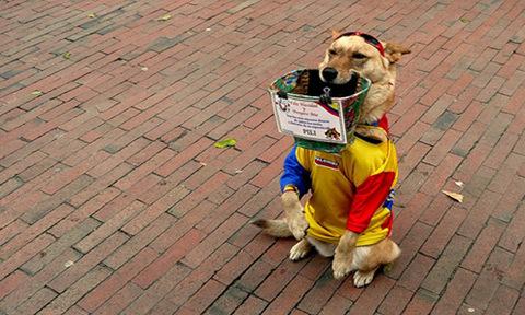 Loạt ảnh vui về chó cưng thay chủ đi kiếm tiền