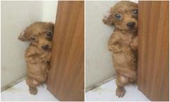 Chó bị chủ phạt, run rẩy nép góc tường