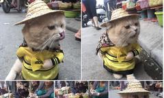 Mèo đi 'vi hành' ồn ào cả khu chợ
