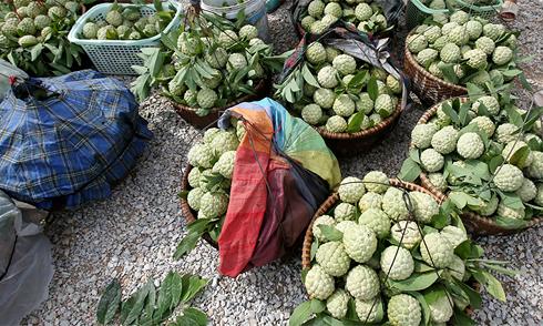 Đi Lạng Sơn mua và ăn na no bụng