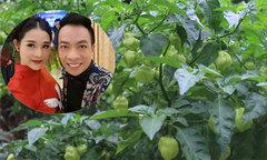 Vườn rau hữu cơ 'cả họ ăn không hết' của vợ chồng ca sĩ Việt Hoàn