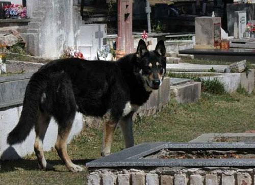 Con chó không chịu dời nghĩa trang đã 10 năm nay. Ảnh: Cadena 3.