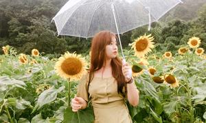 Ngôi làng hoa hướng dương đẹp 'rụng tim' ở Hàn Quốc