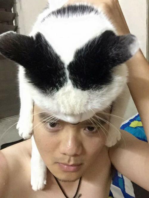 chu-meo-beo-cua-chang-rocker-nghiep-du-hut-54000-luot-theo-doi-9