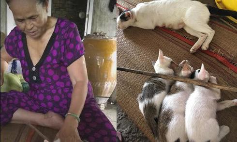Cháu gái đăng video bà ngoại cầm roi dạy mèo lên mạng xã hội