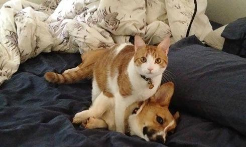 Loạt ảnh chó và mèo đôi khi trở thành 'đôi bạn tri kỷ'