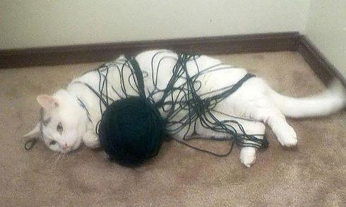 Loạt ảnh vui về những tai nạn ngớ ngẩn của loài mèo