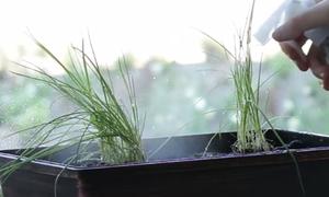 Dâu mới ghi điểm với mẹ chồng bằng mẹo trồng vườn rau trong bếp