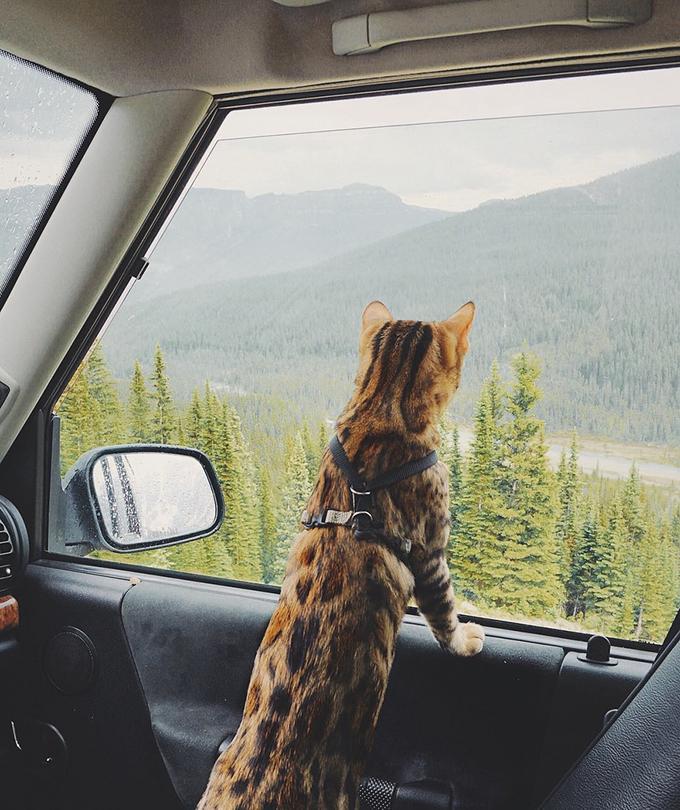Chú mèo khiến \'loài người ghen tỵ vì du lịch quá nhiều\'