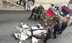 Ngựa kéo xe dâu bất ngờ ngất xỉu, nằm vật trên đường