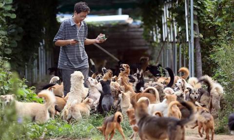 Giải cứu hơn 700 con chó trong suốt 8 năm