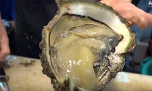 Ghé chợ hải sản ở Nhật thưởng thức món hàu sống 'to bự chảng'