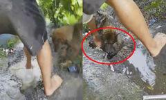 Chó mẹ 'tát nước', cào đất cứu chó con nằm trong hang sâu