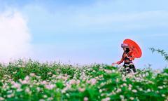 Lễ hội hoa tam giác mạch Fansipan tại Sapa