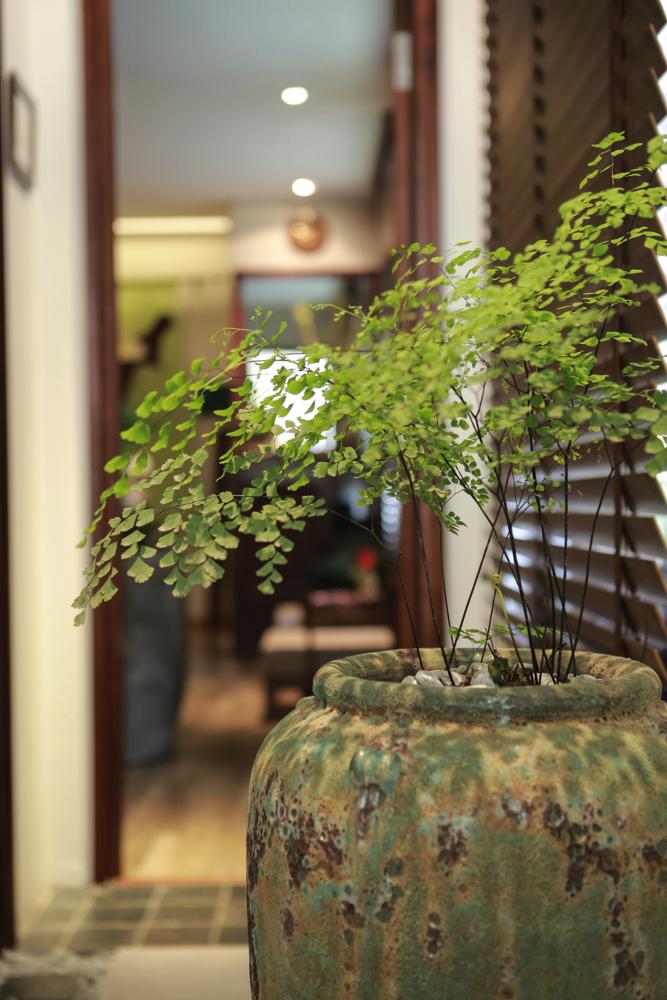 Cây Ginkgo rất dễ sống và có vẻ đẹp thu hút (Nguồn ảnh: Menard Việt Nam)