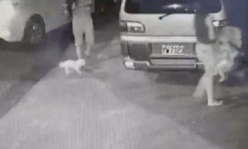 Gặp tai nạn, mẹ bỏ con nhỏ tại hiện trường để đưa chó cưng đến bệnh viện